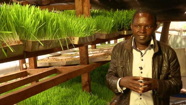 Hydroponic agriculture in Kenya: soilless farming gaining ground in Kenya