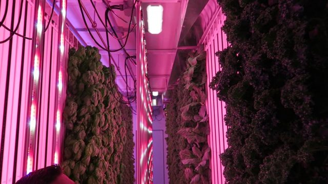 Modern Indoor Hydroponic Farm Tour