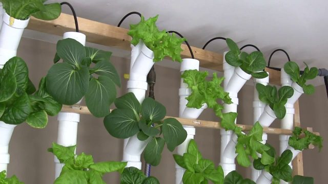 Basement Hydroponic Tower Garden Version 2.0