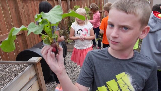 Redtail Ridge school garden
