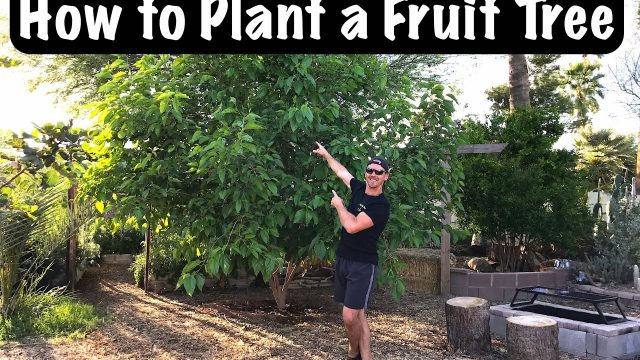 Gardening for Beginners – How to Sucessfully Plant a Fruit Tree in Your Backyard