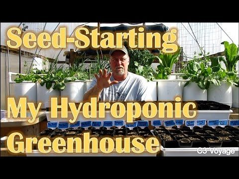 Starting Seed for the Hydroponic Greenhouse