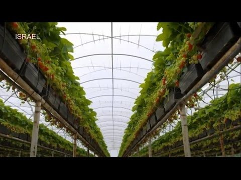 Amazing – The Future Of Agriculture: Hydroponic and Vertical Farming