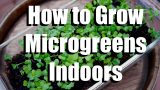 How to Grow Microgreens Indoors // Growing Your Indoor Garden #1