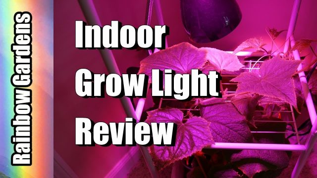 15 Watt Indoor LED Vegetative Grow Light Review & Cucumber Tower | INDOOR GARDEN