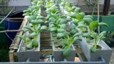Why Gardeners Are Choosing Hydroponics Gardening – Inexpensive Gardening