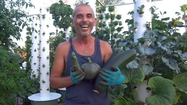 Zucchini on Tower Garden