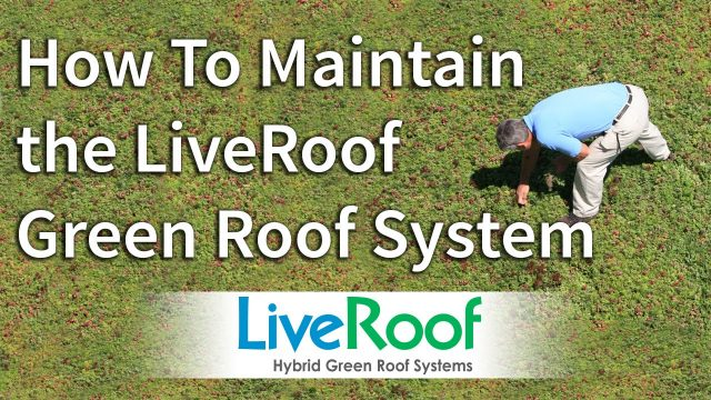 How to Maintain the LiveRoof Green Roof System