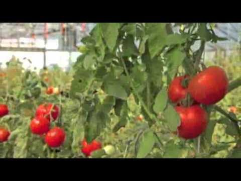 Home Town Farms: The New Vertical Urban Farm